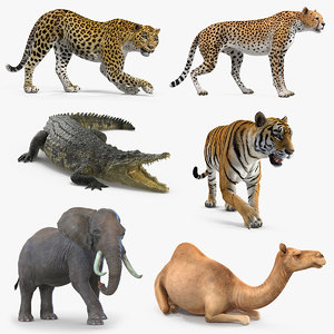 3D african animals 3 rigged