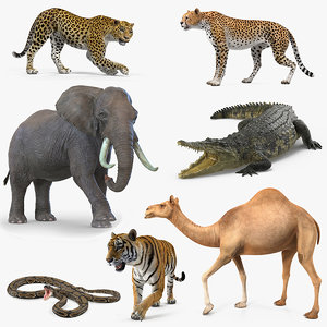 3D african animals rigged 4 model