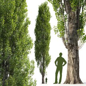 3D mighty poplar