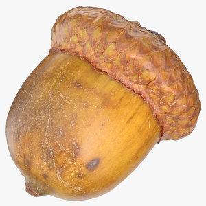 acorn 03 3D model