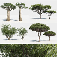 Plants Pack: Africa Trees +GrowFX