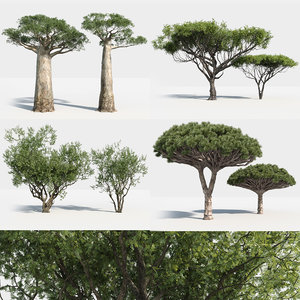 plants africa trees growfx model