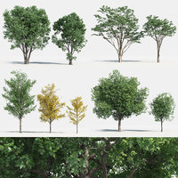 Plants Pack 2: Chinese Trees (+GrowFX)