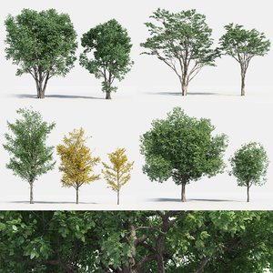 plants pack 2: chinese 3D model