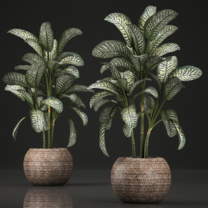 ornamental pot dieffenbachia 3D model