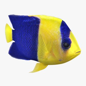 3D bicolor angelfish animation