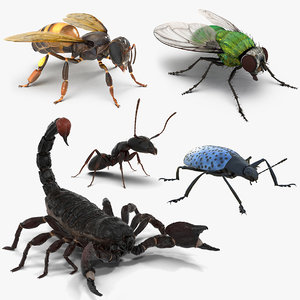 insects set gibbifer 3D