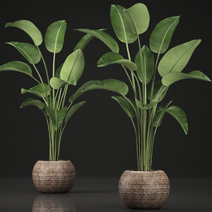 exotic plants banana tree 3D model
