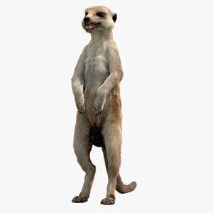 meerkat realistic 3D