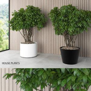 modern house plants 3d model