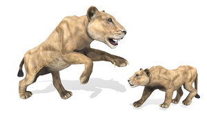 3D model wild animal lioness rigged