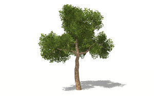 3D realistic forest trees model