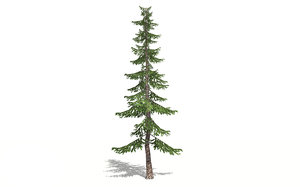 pines tree forest model