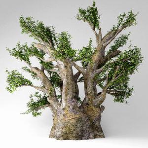 3D african baobab tree model