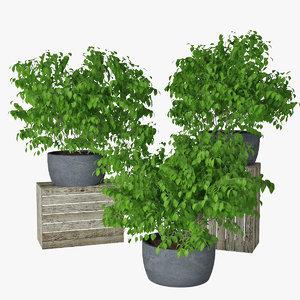 small plant 3D model