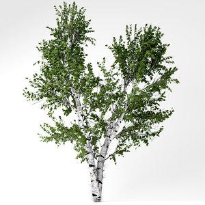 white birch tree 3D model