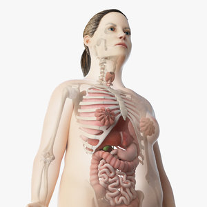 skin obese skeleton organs 3D model