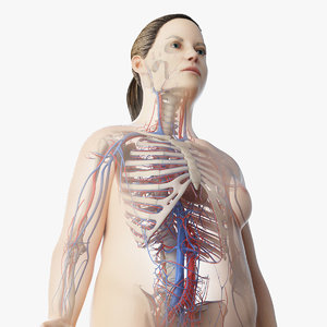 3D skin obese female skeleton model