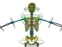 skeleton CAT bones
