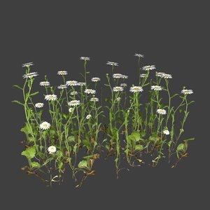 3D chamomile flower plants