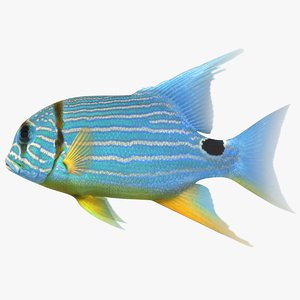 3D blue yellow striped fish model