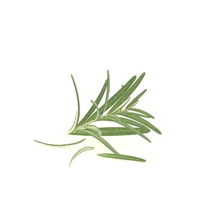 rosemary spice food leaf 3D model