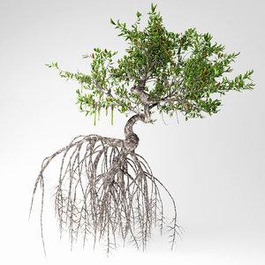 mangrove tree 3D