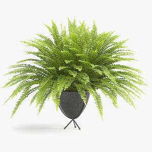3D model sword fern