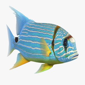 blue yellow striped fish 3D model