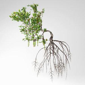 mangrove tree 3D model