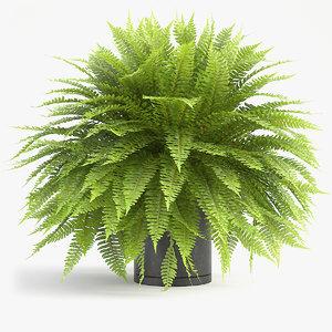 3D sword fern