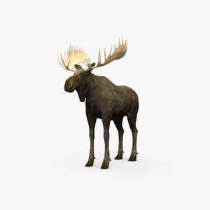 3D moose deer mammal