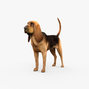 hound bloodhound 3D model