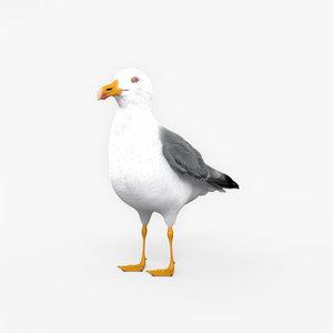 gull common 3D model