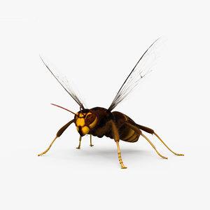3D asian hornet asia model