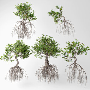 3D mangrove trees model