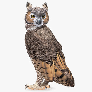 3D model great horned owl standing