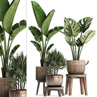 Exotic plants set 457