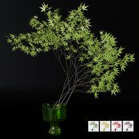 Decorative branch japanese maple