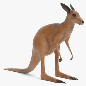 3D kangaroo pbr