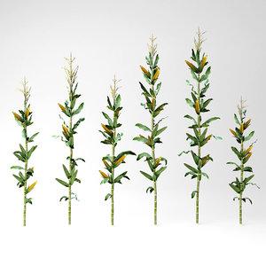 corn row 3D model