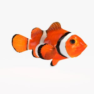 3D clownfish animations