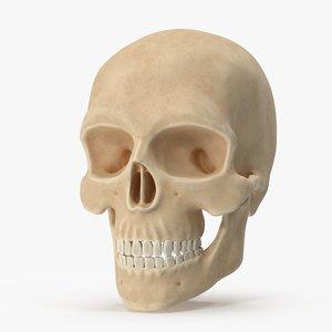 skull bone head model
