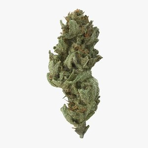 cannabis bud amnesia model