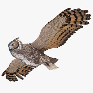 great horned owl flying 3D
