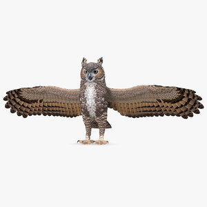 great horned owl t-pose 3D model