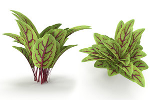 3D blood sorrel