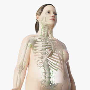 skin obese female skeleton 3D