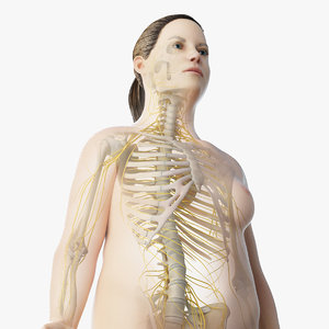 3D model skin obese female skeleton