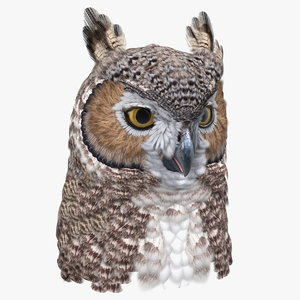 3D great horned owl head